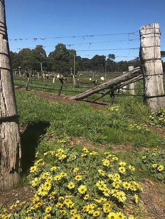 Gisborne, Austrália: photo0.jpg