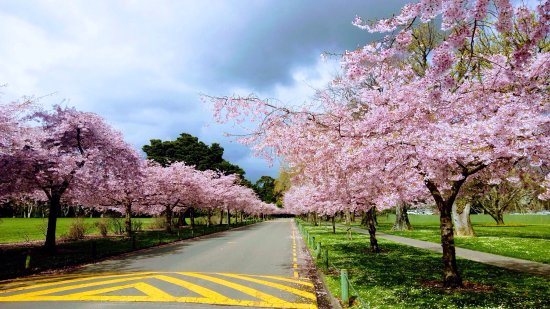 Palmerston North, New Zealand: Victoria Esplanade Gardens