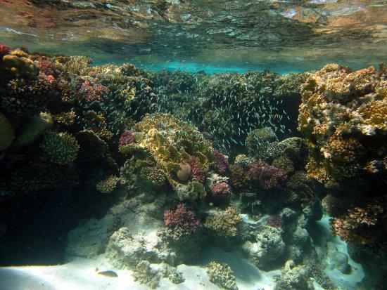 Tiran Island: photo3.jpg