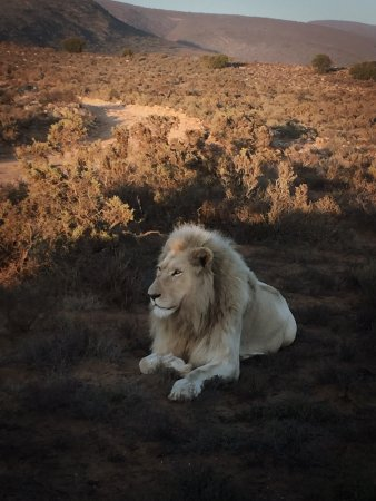 Sanbona Wildlife Reserve: photo0.jpg