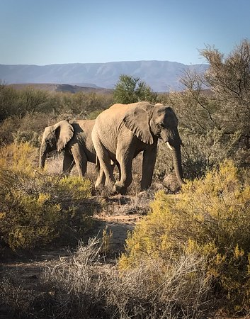 Sanbona Wildlife Reserve: photo1.jpg