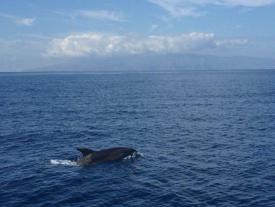 Santiago del Teide, Spania: Dolphins