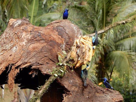 Boca Tapada, Costa Rica: Auch hier wird gefüttert