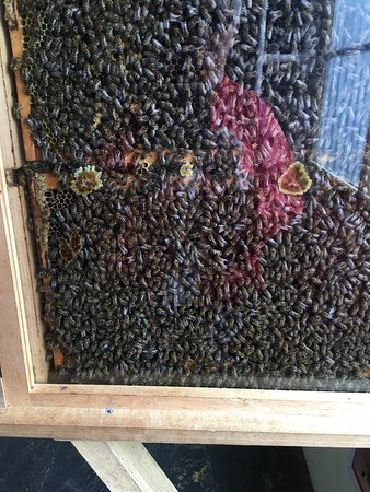 Clifford's Honey Farm: photo2.jpg