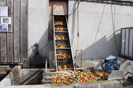 Clecy, فرنسا: Les pommes sont lavées