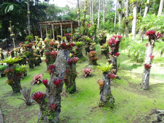 Jardin de balata botanical garden route de balata in for Jardin balata