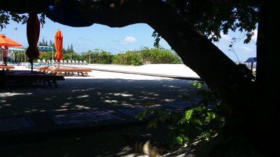 Hulhule Island: 20170825_094610_large.jpg