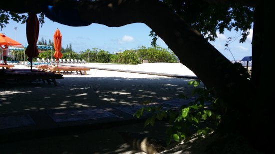 Hulhule Island Hotel: 20170825_094610_large.jpg
