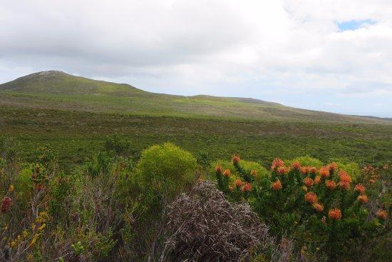 Overberg District, Südafrika: scenery