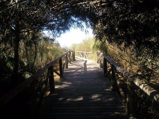"""Centro de Interpretación de la Naturaleza y El Litoral """"El Camaleón"""": passerelle"""