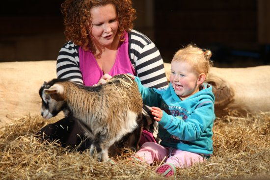 Exmouth, UK: Get up close to the animals in the Pet Centre