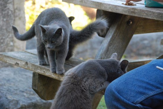 Burleigh Falls, Canadá: The cats