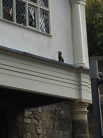 York Cat Trail: I spy...