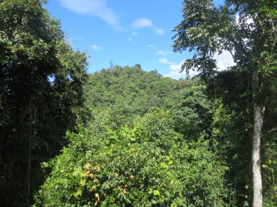 Ban Xieng Lom, Laos: forest view from delux room