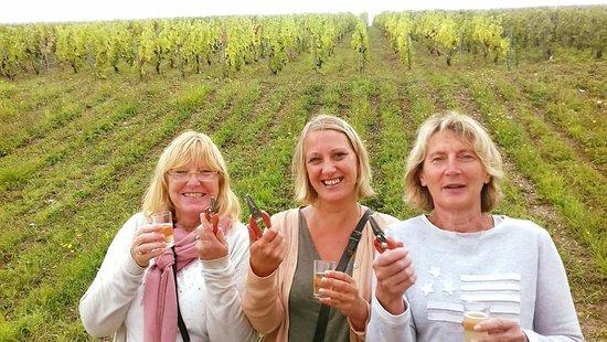 Epernay, Francja: découverte des vignes