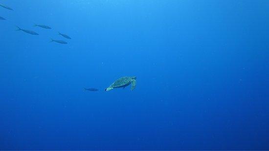 Balicasag Island, Filipina: photo5.jpg