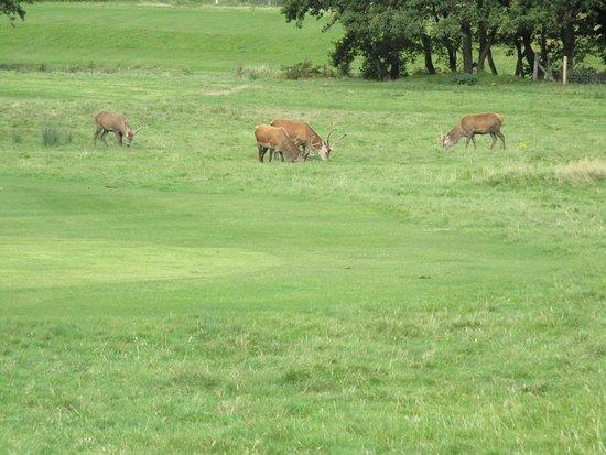Lochranza, UK: On voit bien qu'il s'agit d'un golf !