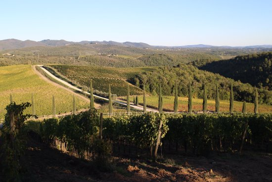 Vagliagli, Italien: ブドウ畑から遠くを見下ろす、遠くの丘も当ワイナリーの畑