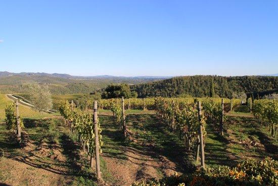 Vagliagli, Italien: 敷地隣接のブドウ畑