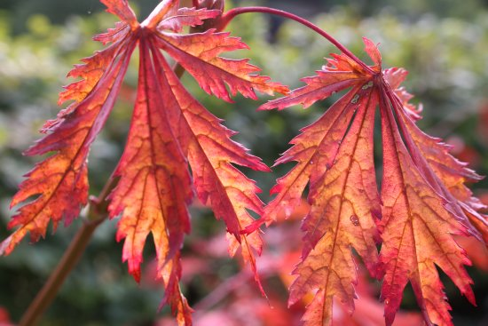 RSPB Flatford Wildlife Garden: Autumn colours at the RSPB garden