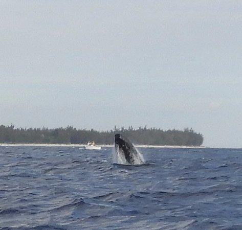Saint-Gilles-Les-Bains, جزيرة ريونيون: saut de baleine