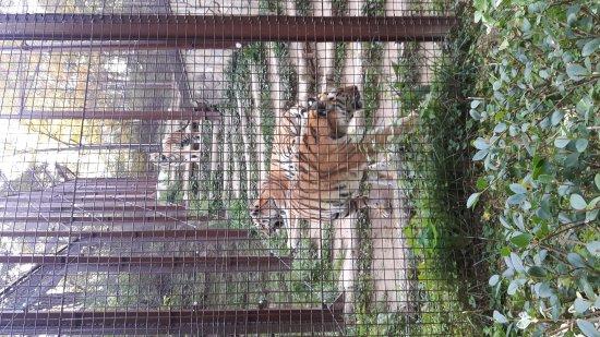 Veszprem Zoo: Veszprémi Állatkert
