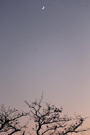 Timbavati Safari Lodge: preciosos amaneceres