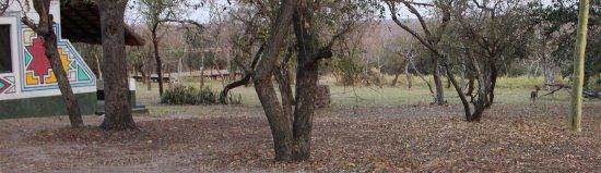 Timbavati Safari Lodge: te encontrarás animales (no peligrosos) cerca de las cabañas