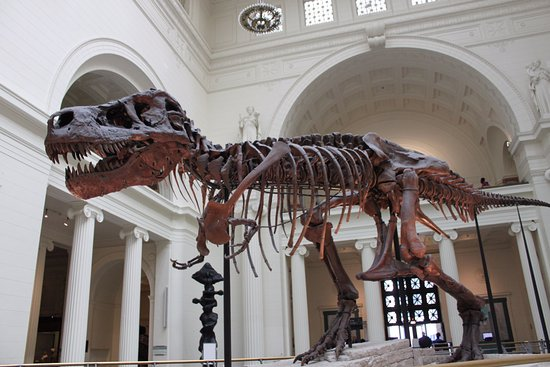 W Chicago - City Center: Sue - The world's largest, most complete, and best preserved Tyrannosaurus rex