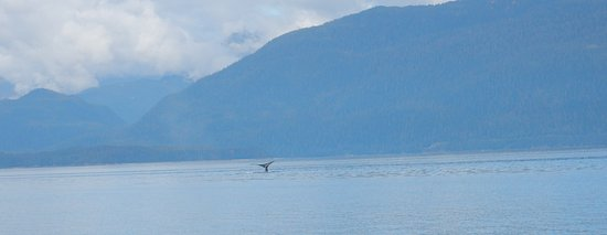 Harv and Marv's Outback Alaska: Humpback whale north of Juneau