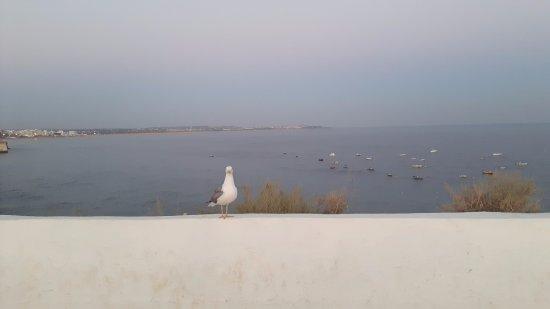 Be Smart Terrace Algarve Foto