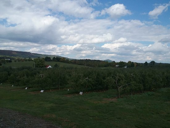 Winchester, Wirginia: some of the apple trees