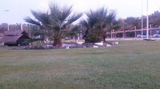 Mirfa, United Arab Emirates: من مدخل الفندق ووجود البط