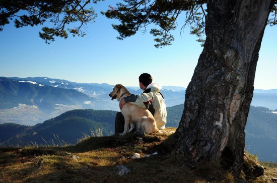 Morel, Switzerland: Pets welcome