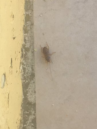San Pawl Hotel: This is what I was given when I complained about cockroaches and the appalling smell coming from