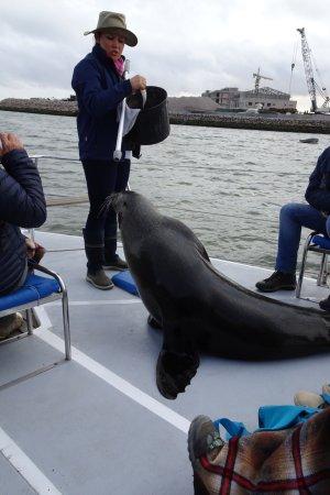 Walvis Bay, Namibia: Seal getting his reward for visiting the ship