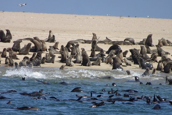 Walvis Bay, Namibia: A seal colony