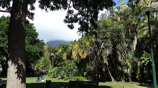 Cape Town Central, South Africa: Vue du jardin