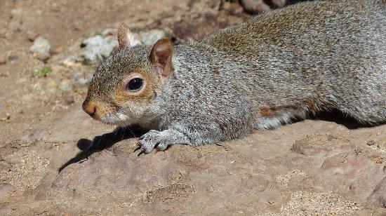 Cape Town Central, South Africa: écureuil