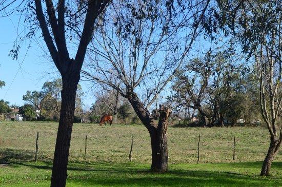 Crespo, Argentina: Caballos junto al parque