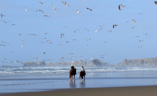 Bandon Beach Riding Stables : On a fall day, riders have the beach pretty much to themselves.... except for the millions of gu