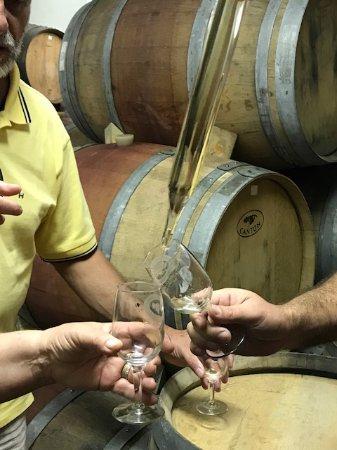 Greenport, NY: Barrel tasting