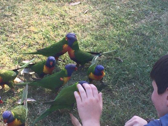 Narooma, Αυστραλία: photo0.jpg