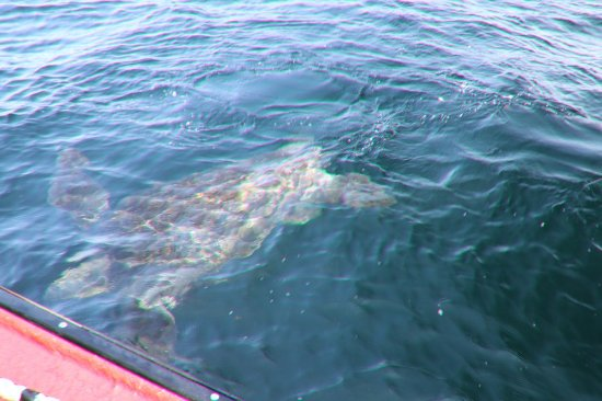 Bay St. Lawrence, Canada: He is huge!