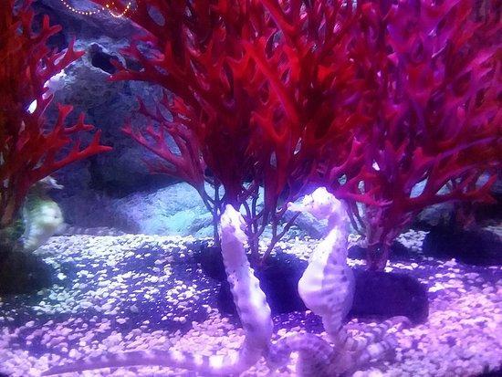 Concord, NC: seahorses