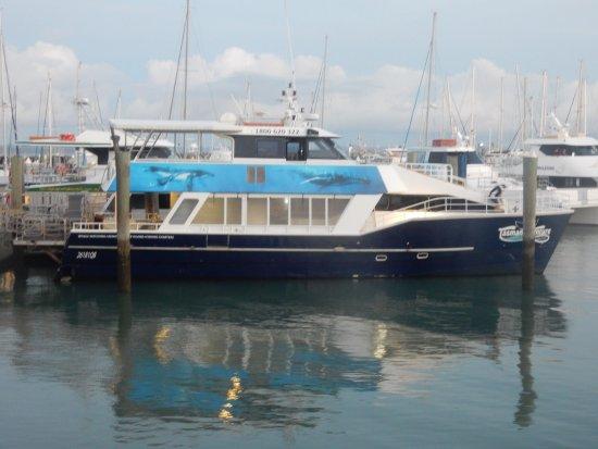 Hervey Bay, Australia: The perfect boat - lots of shade