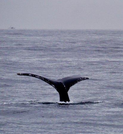 New England Aquarium Whale Watch: Great trip