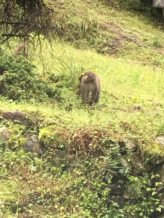 Hanno, Japón: 浅見茶屋の側の道路脇で遊ぶ猿
