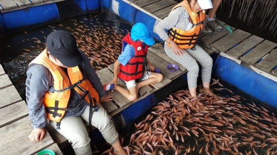 Balapitiya, Sri Lanka: Fish massage