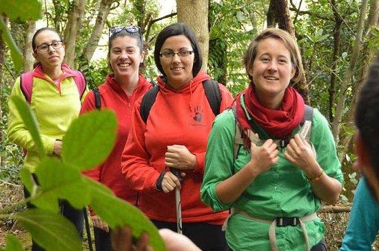 La Laguna Hiking Tour: Biodiversity in the Anaga Mountains